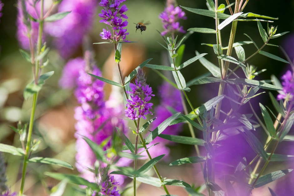 3 Ways To Revamp Your Garden This Year